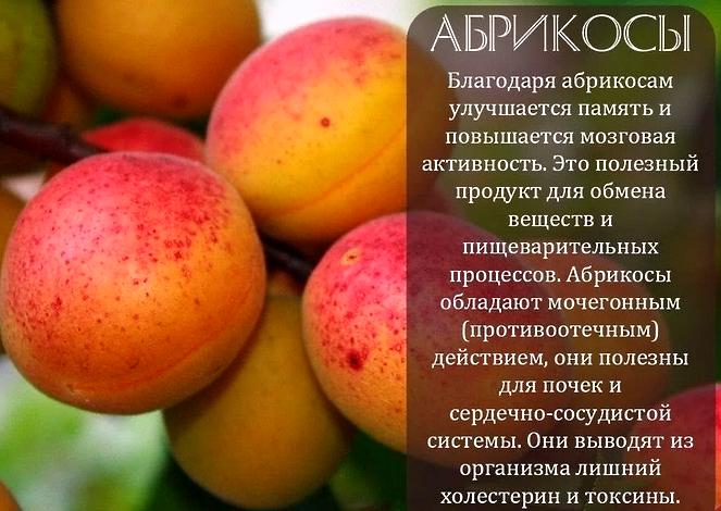 Польза абрикосов - очищение организма