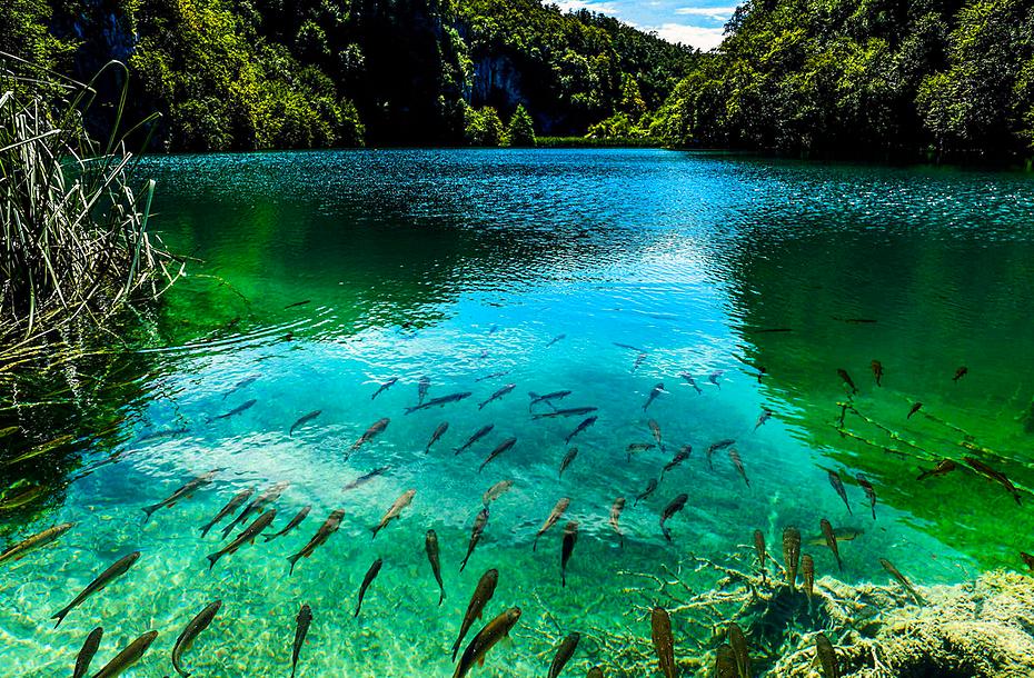 Плитвицкие озера - фото 1